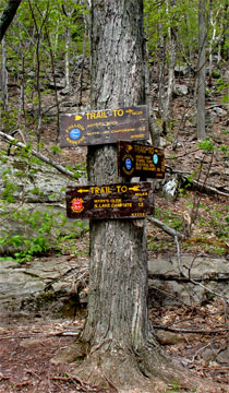 trail junction to North Point Lookout #1
