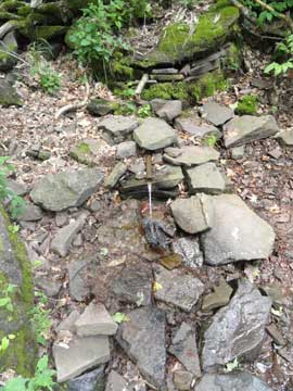 water source on the trail to Lockwood gap and blackhead and black dome mountains