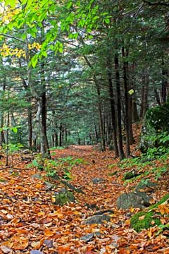 the beginning of the hiking trail from Dutcher's Notch down to Stork Nest Road